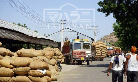 ソジャット公設ヘナ市場