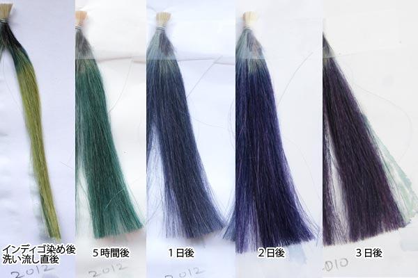 2012産インディゴは染後二日目から発色が違う!…検証インディゴの発色過程