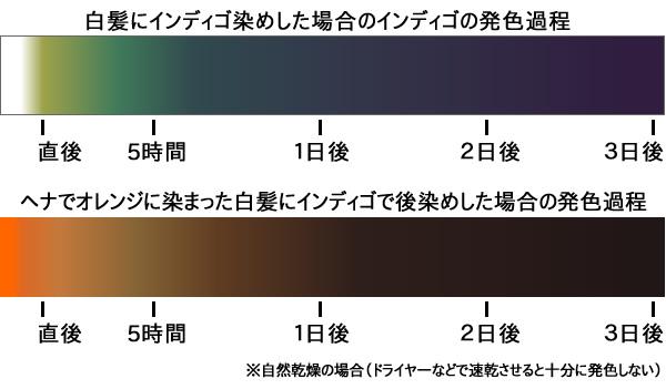 インディゴの発色プロセス